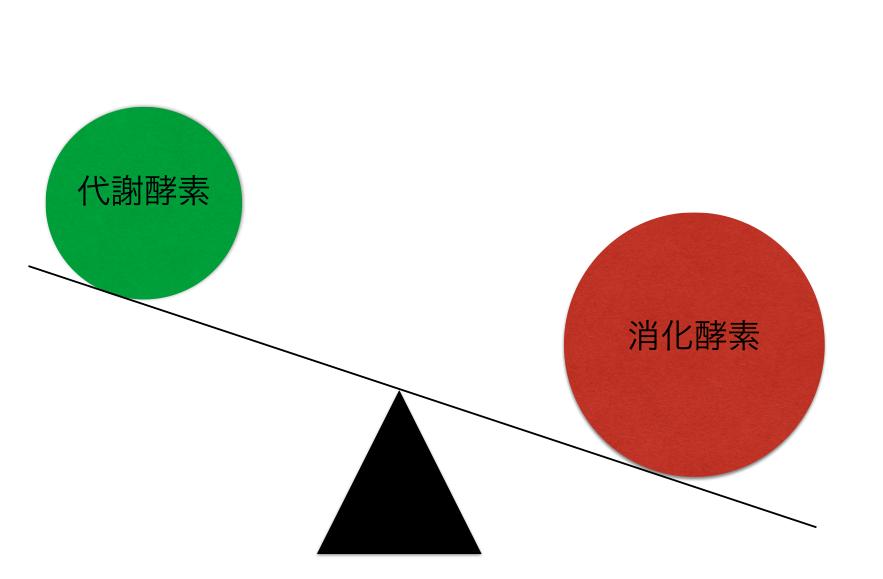 消化酵素と代謝酵素の関係
