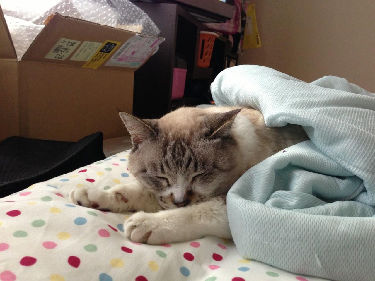 猫が死んだ 悲しい