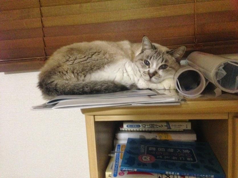 我が家の猫が死んだ