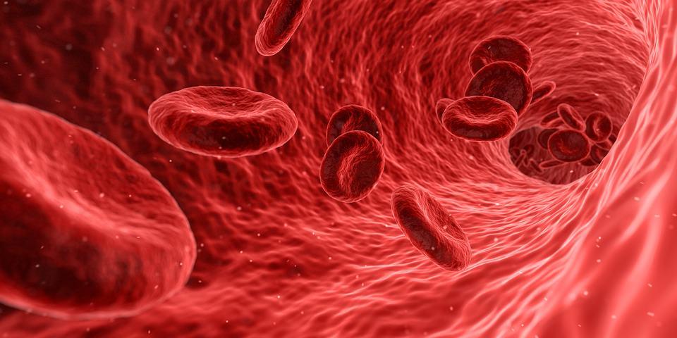 貧血と毛細血管 栄養学講座
