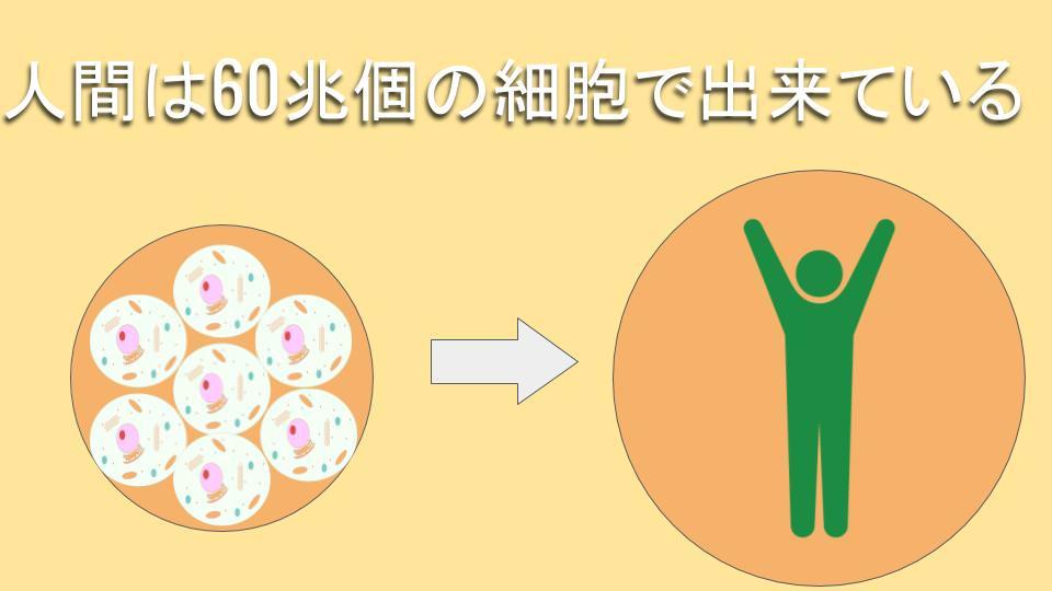 トランス脂肪酸の害